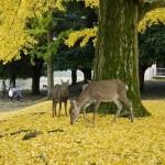 奈良の紅葉は東大寺がいい!歴史ある場所でゆっくりと