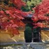 奈良の紅葉を秋篠寺で心行くままに堪能する