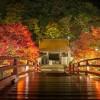 奈良で紅葉なら室生寺に行かなきゃダメ?見事な景観に圧倒!